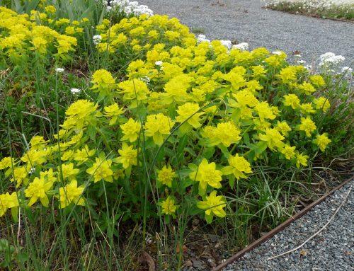 Blühende Pflanzen trotz Wühlmäusen